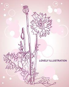 Free Poppy Flowers Royalty Free Stock Photo - 18383395