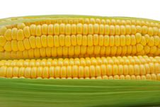Free Isolated Corn Stock Images - 18383554