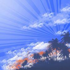 Free Palm Tree Stock Photo - 18383770