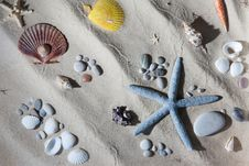 Free Seashell Composition Stock Photos - 18385923