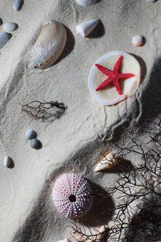 Free Seashell Composition Royalty Free Stock Photo - 18386035