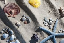 Free Seashell Composition Royalty Free Stock Images - 18386129
