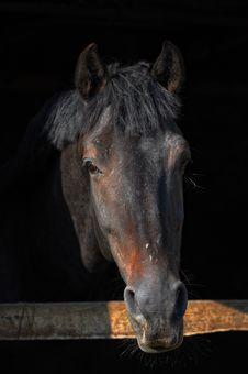 Free Horse Stock Photography - 18386252