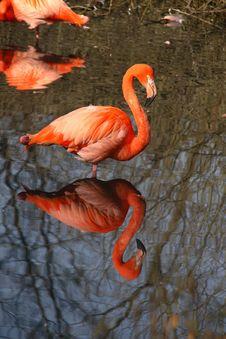 Free Pink Flamingo Royalty Free Stock Photo - 18386375
