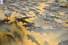 Free Dark Fish Royalty Free Stock Photo - 18390125