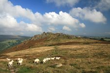 Free Sheep On Chinkwell Tor, Dartmoor, Royalty Free Stock Photography - 18390907