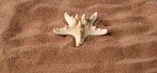 Large Starfish On The Sand Stock Photos