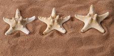 Three Large Starfish On The Sand Royalty Free Stock Photo
