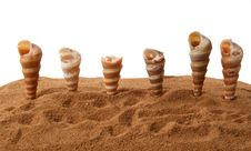Number Of Seashells On The Sand Royalty Free Stock Photography