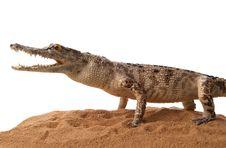Free Crocodile Stock Photos - 18392123