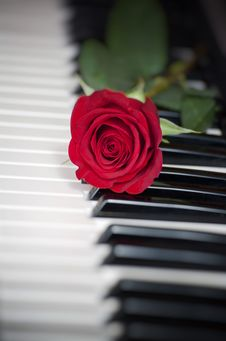 Free Rose And Piano Royalty Free Stock Images - 18392369