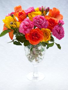 Multi-colored Roses Royalty Free Stock Photos
