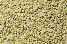 Free Loose Pearl Barley, Horizontal Texture Royalty Free Stock Photos - 18398058