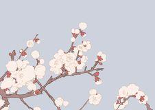 Free Sakura Blossom Stock Photography - 18399552