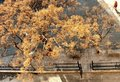 Free Yellow Tree From Above Stock Photography - 1846182