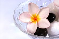 Free Frangipane Flowers And Pebbles In A Glass Bowl Stock Images - 1840684