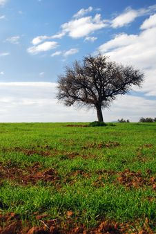 Free Green Fields, Blue Sky, Lonely Tree Royalty Free Stock Image - 1841486