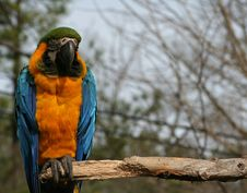 Free Macaw Royalty Free Stock Photography - 1842707