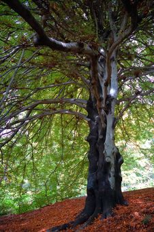 Free Tree View Upwards Stock Photo - 1844140