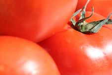 Free Red Tomatoes Stock Photos - 1845083