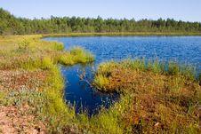 Free Coast Of Small Lake Stock Images - 1845654