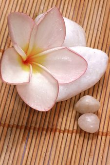 Free Frangipane Flower And Pebbles On The Rattan Background Stock Image - 1847431