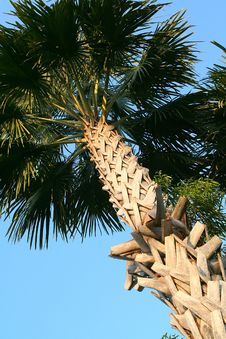 Free Palm-tree In Thailand Royalty Free Stock Image - 1848756