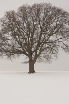 Free Winter Landscape Covered In Snow Royalty Free Stock Photos - 18400728
