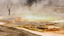 Free Mammoth Hot Springs Panoramic Royalty Free Stock Images - 18401729