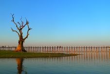 Landscape Of Wooden Bridge And Dead Tree Royalty Free Stock Images