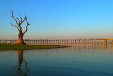 Landscape Of Wooden Bridge And Dead Tree Stock Image