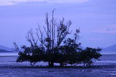 Free Tree Stock Photos - 18403483