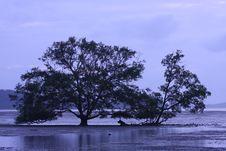 Free Tree Stock Photo - 18403490