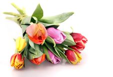 Free Tulips Fie Royalty Free Stock Image - 18405516