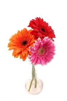 Free Gerbera Flowers Stock Photography - 18405592