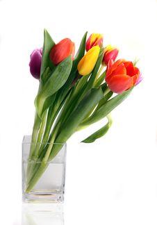 Free Fresh Tulips Royalty Free Stock Image - 18405596