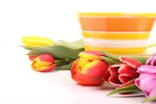 Free Fresh Tulips Still Life Stock Photos - 18405623