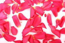 Free Roses Petals Royalty Free Stock Images - 18405639