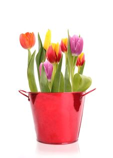 Free TUlips Stock Images - 18405644