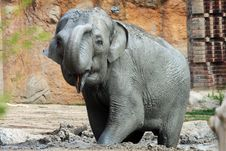 Free Elefant Royalty Free Stock Photos - 18406008