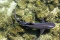 Free Galapagos Shark Royalty Free Stock Photography - 18414517