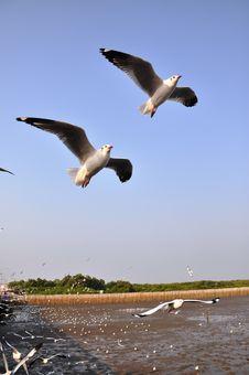 Free Seagulls Royalty Free Stock Photo - 18410665