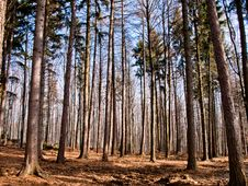 Free Forest Background Royalty Free Stock Image - 18410756