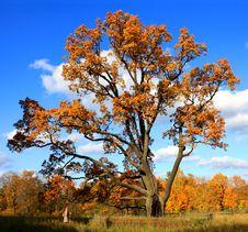 Free Autumnal Tree Stock Photos - 18411113