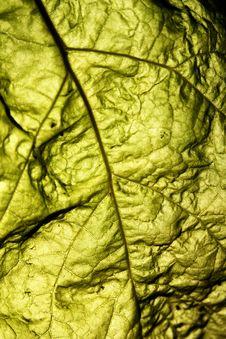 Free Backlit Leaf Stock Photography - 18414122