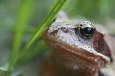 Free Little Frog In The Grassfield Stock Photography - 18414702