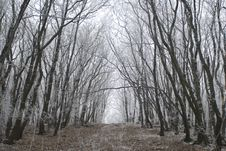 Free A Very Nice Winter Forest Stock Images - 18415744