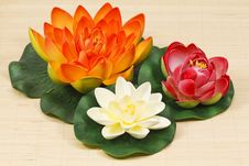Free Water Lily Flowers Stock Photo - 18416430