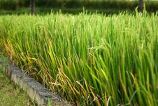 Free Background Of Green Grass Stock Photography - 18419752