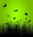 Free Spring5 Stock Photos - 18426943